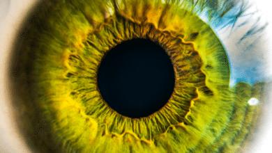 Photo of Observar. Las cosas no son como son, sino como las vemos.