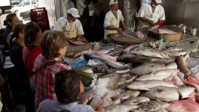 Photo of Destruyen 40 kilos de pescados y mariscos en mal estado, en Querétaro