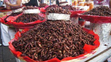 Photo of Insectos, ¿el alimento del futuro?