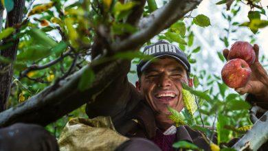 Photo of Agradece embajador de EEUU a mexicanos que trabajan en campo en su país