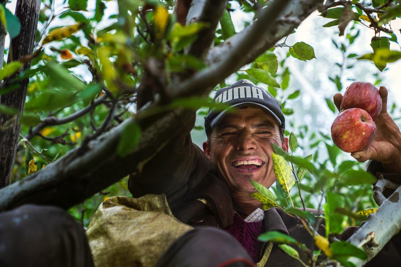 Agricultor manzanas covid