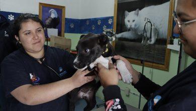 Photo of Promueve UCPA de Corregidora servicios para el cuidado de mascotas