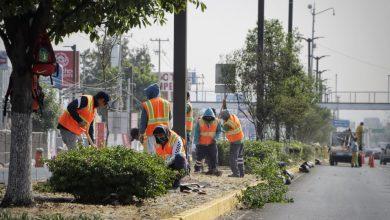 Photo of Reforestación de Paseo Constituyentes al 70% de avance en Corregidora