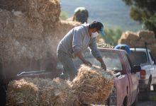 Photo of Más de 6 mil pacas de forraje a 309 productores en El Marqués